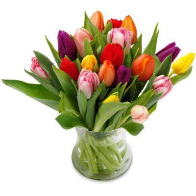 25-тюльпанов-микс
